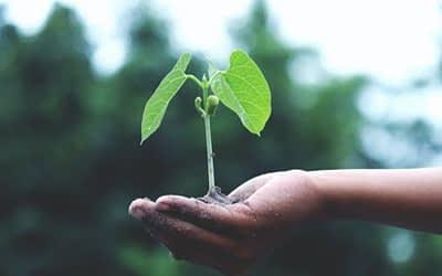 Lenten Growth